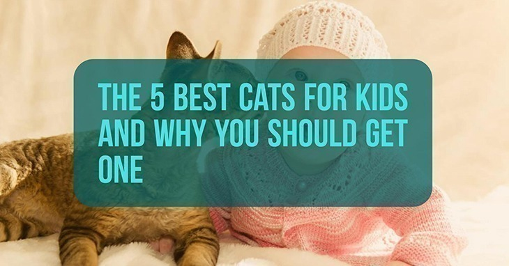 Best Cats For Kids